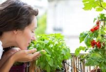 Выращивание овощей на окне или балконе