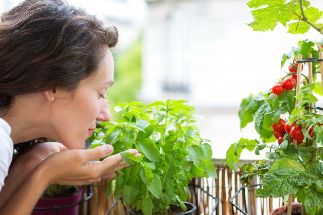 Какие овощи можно вырастить на окне и лоджии?. обсуждение на.