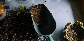 Частичная замена почвы для комнатных растений