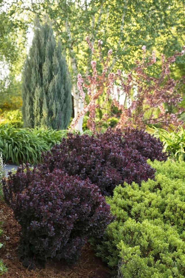 Оформление сада и цветников с преобладанием лиственных и хвойных кустарников