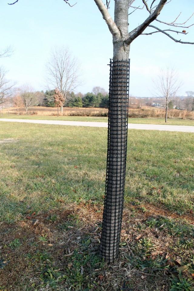 Обёртывание стволов деревьев сеткой с мелкой ячейкой