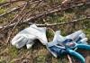 Особенности санитарной обрезки сада осенью