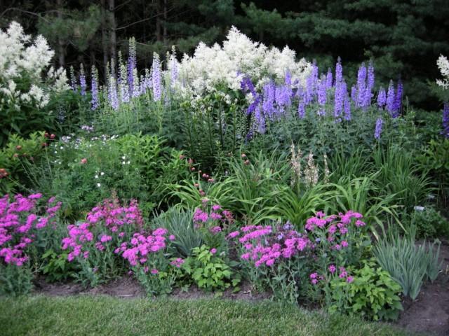 Выращивание цветов правильный подбор факторов