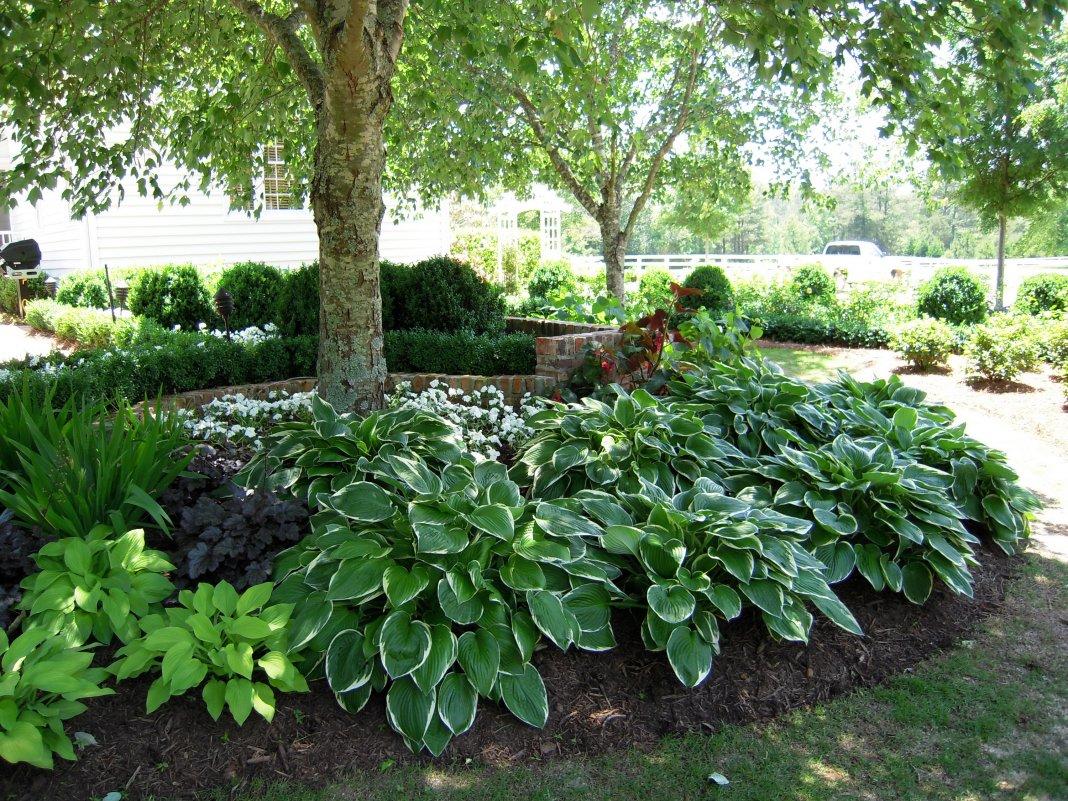Что посадить на клумбе в тени: подборка растений для высадки в тенистую зону участка