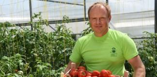 Урожай томатов селекции Агрофирмы ПОИСК.