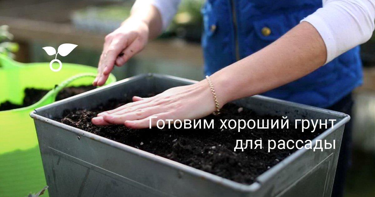 Как приготовить грунт для рассады?