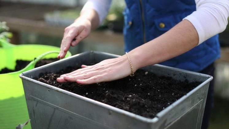 Подготовка семян помидор для рассады в домашних условиях 37
