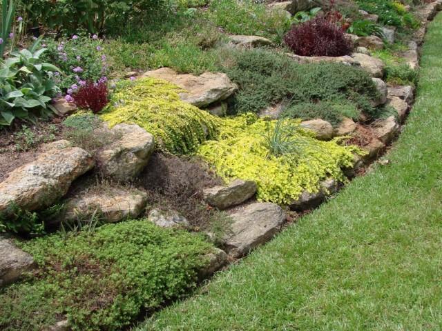 Декоративнолиственные растения для альпийской горки