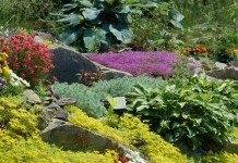 Почвопокровные, декоративнолиственные растения для альпийской горки