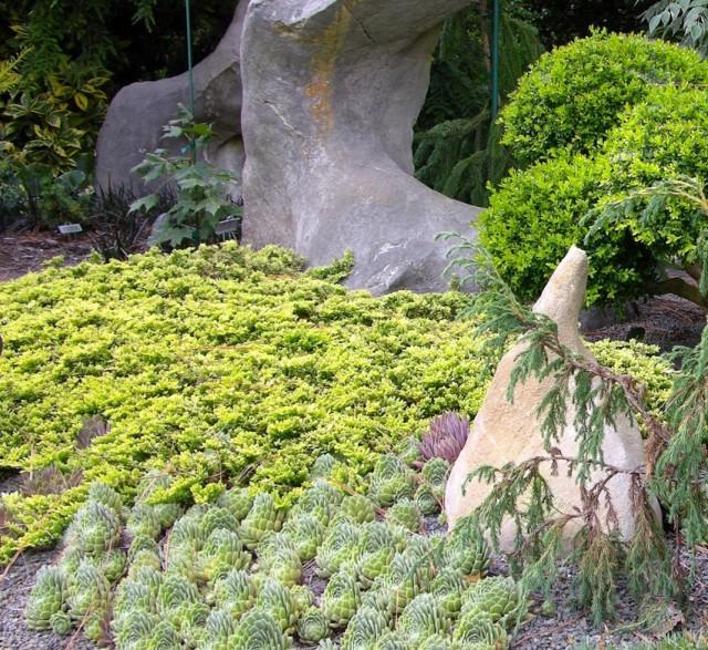 """Можжевельник распростёртый, или горизонтальный """"Мазер Лод"""" (Juniperus horizontalis 'Mother Lode')"""