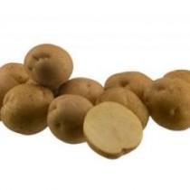 Сорт картофеля для Северо-Кавказского региона - Арсенал