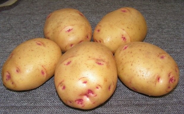 Сорт картофеля для Западно-Сибирского региона - Барон
