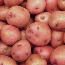 Сорт картофеля для Уральского региона - Башкирский
