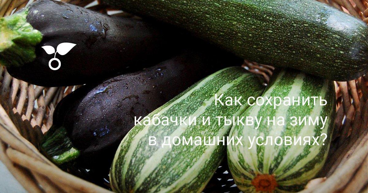 Как хранить тыкву: разрезанную, очищенную, целую, в погребе, в квартире, в холодильнике, в морозилке, при какой температуре