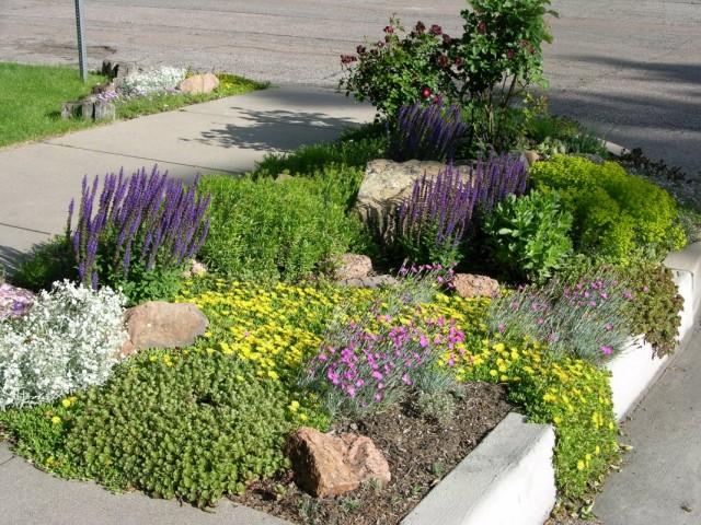 Цветник на участке с засоленной почвой