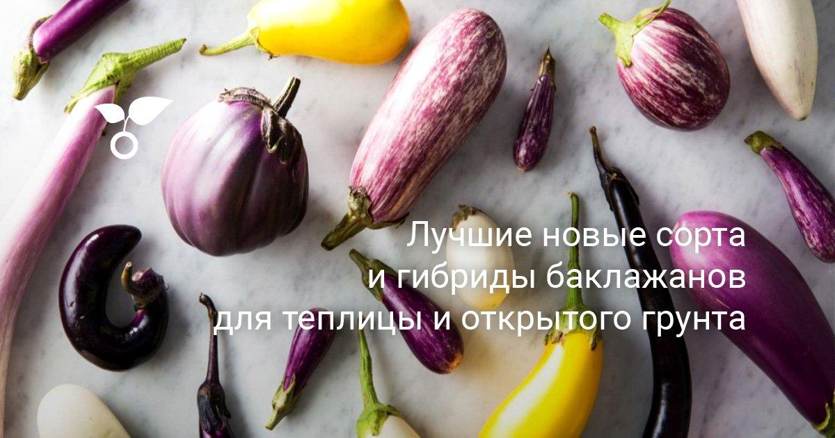 Самые популярные и лучшие сорта баклажанов для средней полосы России