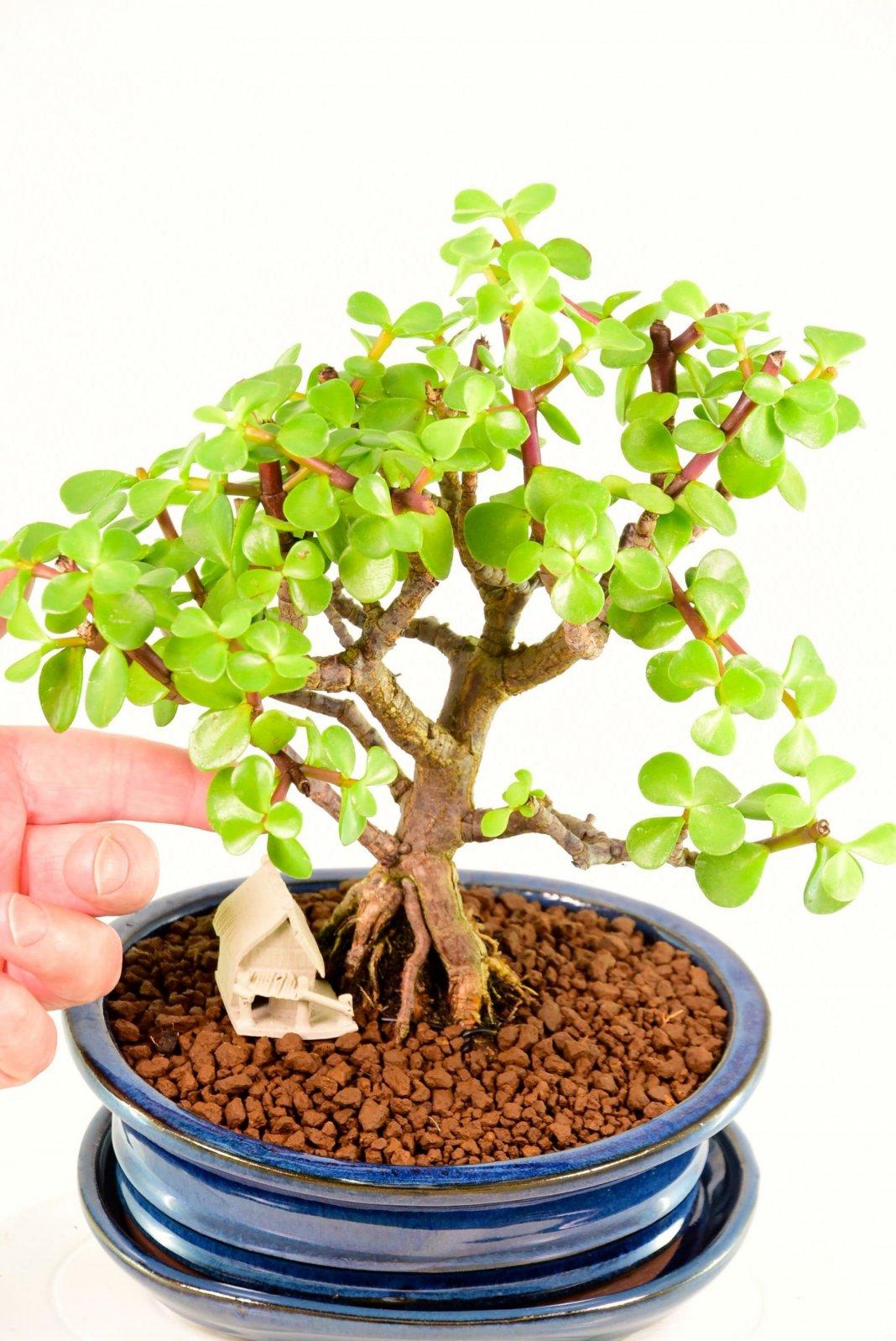 Замиокулькас (Долларовое дерево) - уход в домашних условиях