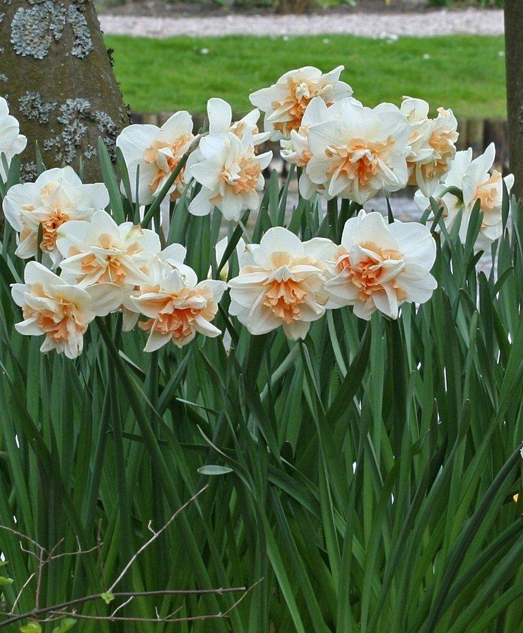 Narcissus-Delnashaugh-2