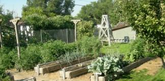 Огород «по Миттлайдеру»