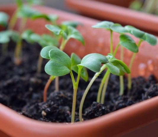 Лунный календарь посева овощей в феврале