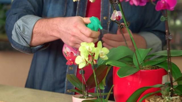 Внекорневая подкормка комнатных орхидей специальным жидким удобрением