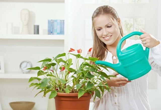 Подкормка комнатных растений при поливе