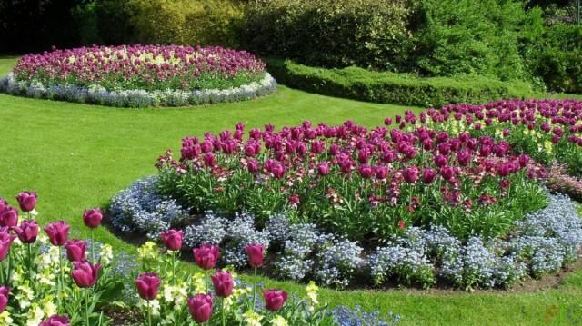 Клумбы с тюльпанами и весенними цветами
