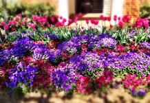 Цветник у загородного дома