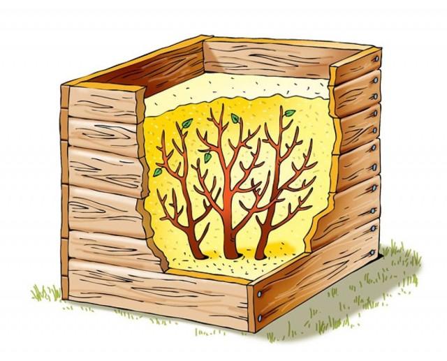 Схема короба с опилками для укрытия кустарников в бесснежную зиму