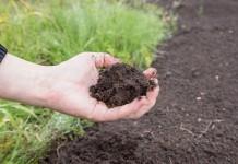 Плодородная почва, улучшенная бактериальными удобрениями