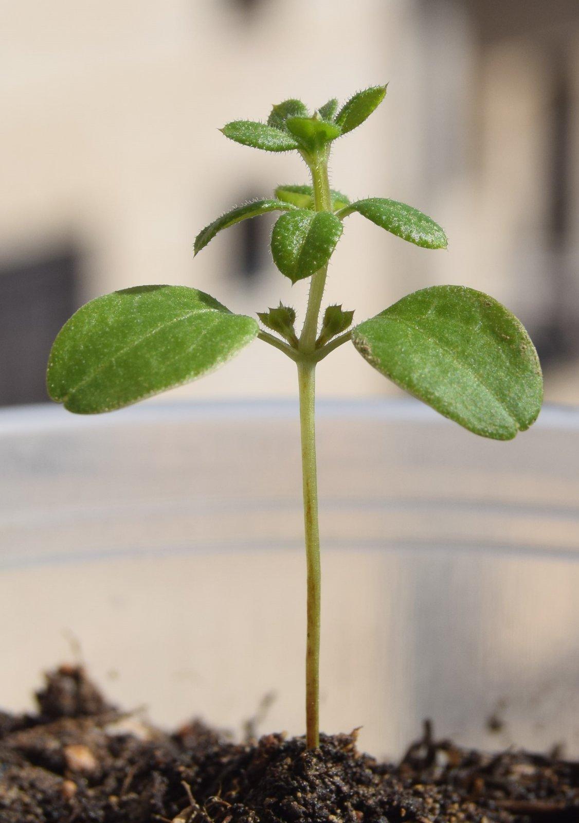Посадила - вот что выросло