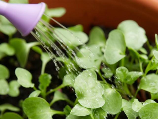 Стимулирование роста растений с помощью препарата Эпин