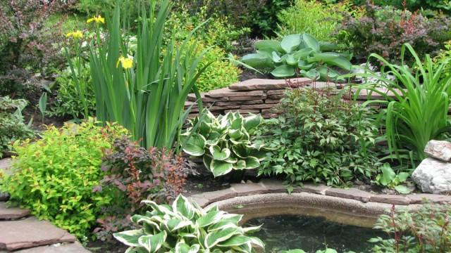 Ирисы и растения партнёры у декоративного пруда