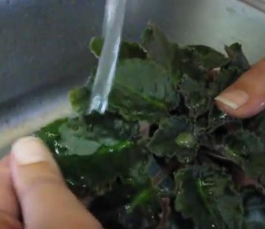 Как помыть сенполию (узамбарскую фиалку)
