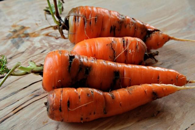Морковь, повреждённая личинками морковной мухи