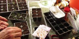 Посев семян цветов на рассаду в марте