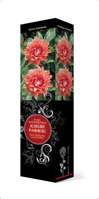 Роза «Кэнди Раффлс» (Rosa 'Candy Ruffles')