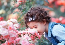 Розы «Раффлс»