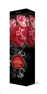 Роза «Раффлс Пассион» (Rosa 'Ruffles Passion')
