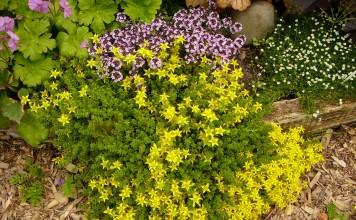 Цветы для бедной почвы