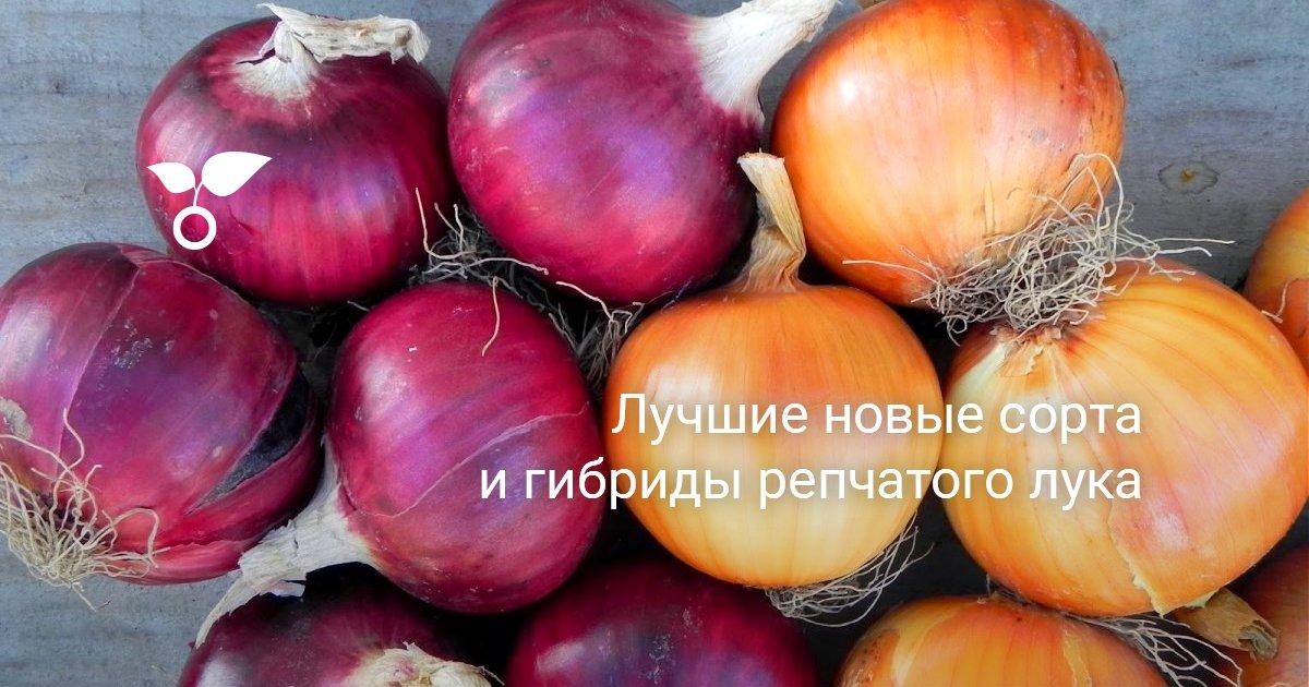 Какие сорта лука существуют: самые лучшие растения