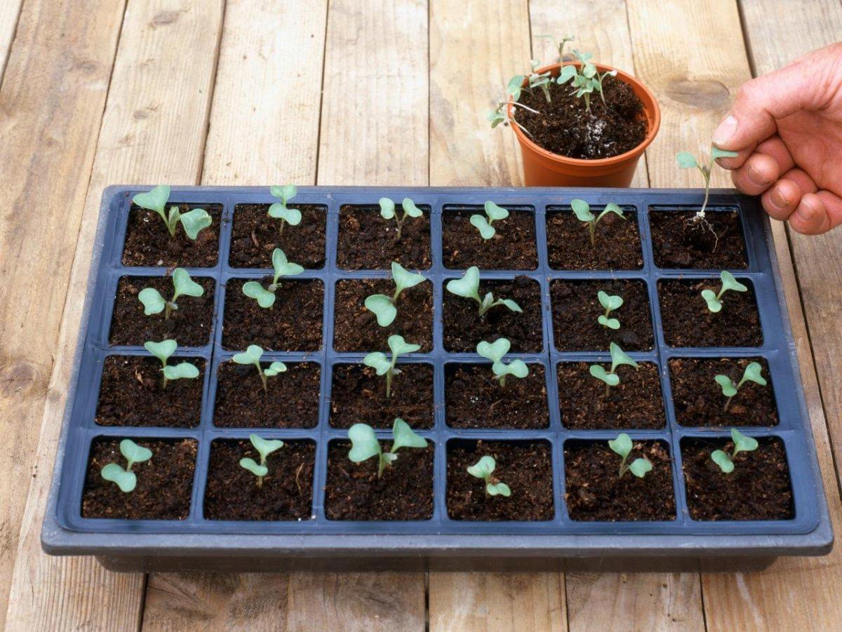 Как сделать поделку для сада из монтажной пены своими руками фото