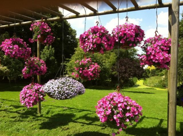 Однолетние цветы в подвесных кашпо