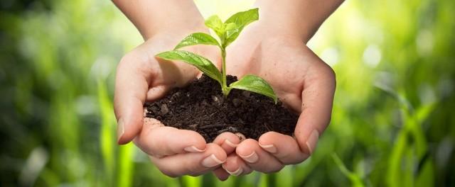 Повышение плодородия почвы