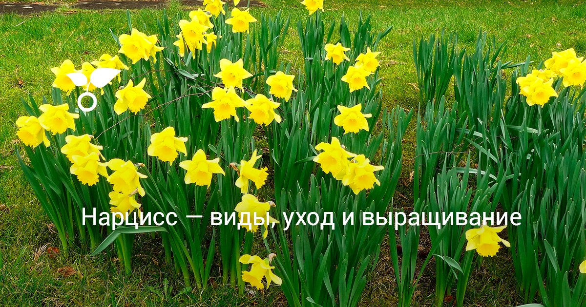 Редкие цветы фото и виды