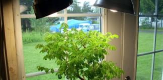Дополнительное освещение для комнатного растения
