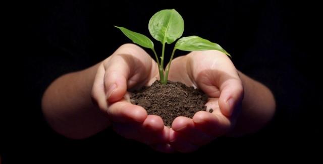 Почему так важно повышать плодородие почвы?