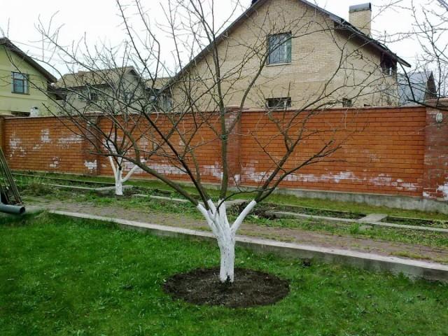 Весенний уход за садом