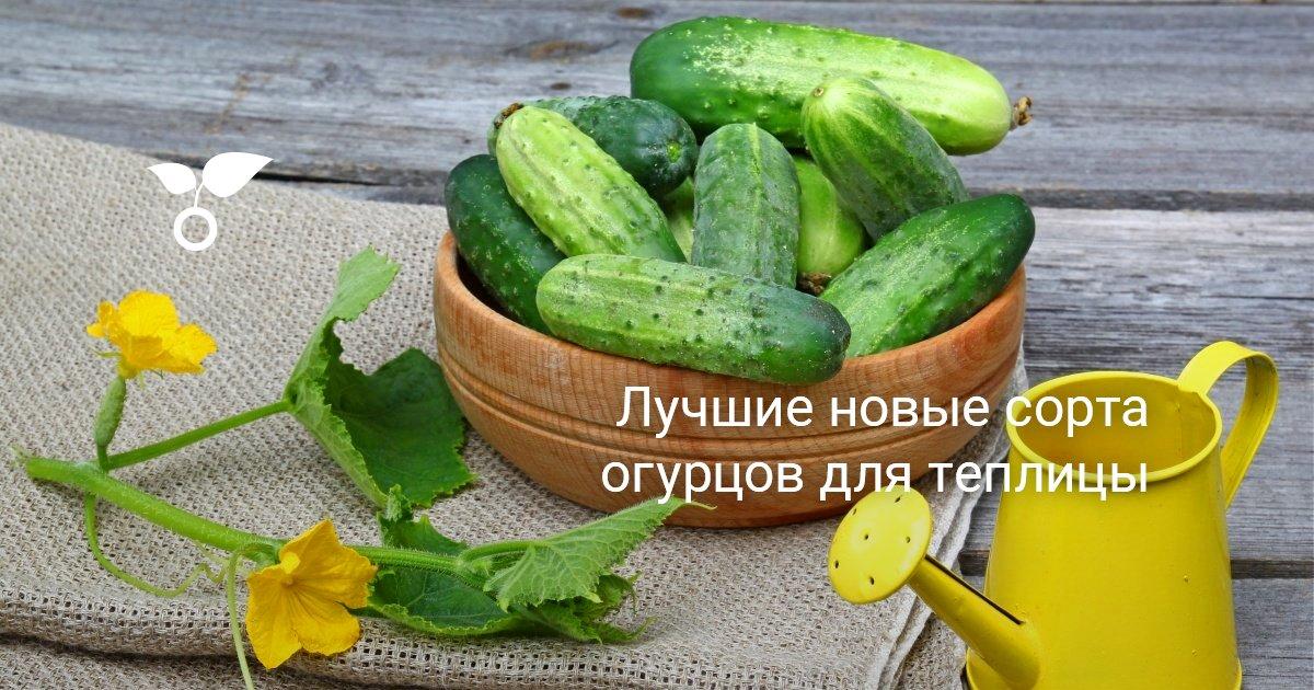 Наилучшие сорт земляники садовой