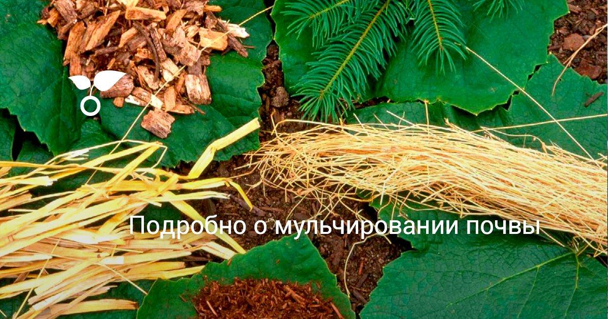 Мульчирование почвы что это такое